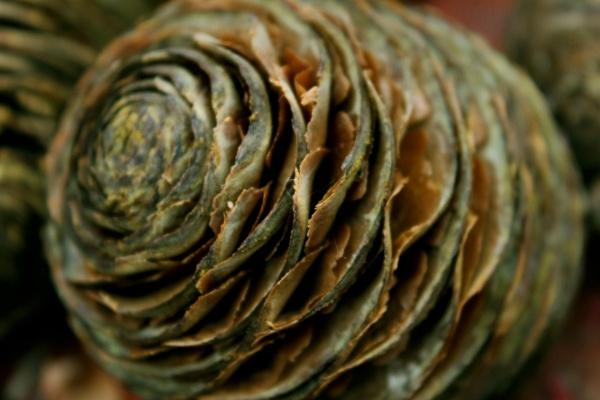 Cone by helenlinda