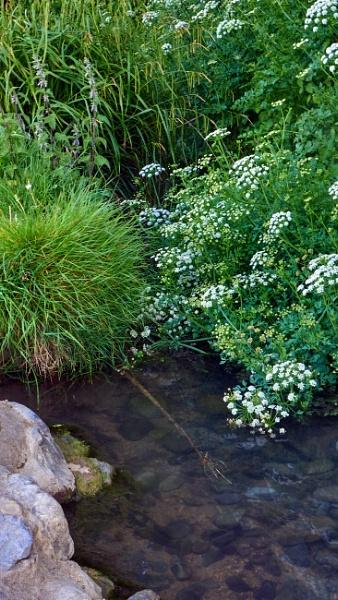 The brook ... by Meditator