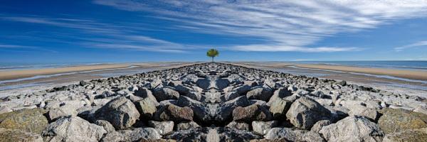 Rocks, beach, tree. by EG