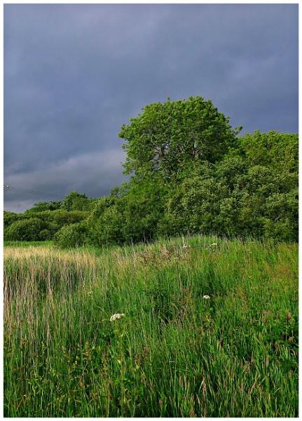 Wdig Moor by Vince52