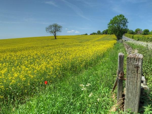 Mellow Yellow by ianmoorcroft