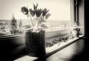 Kitchen windowsill by saltireblue