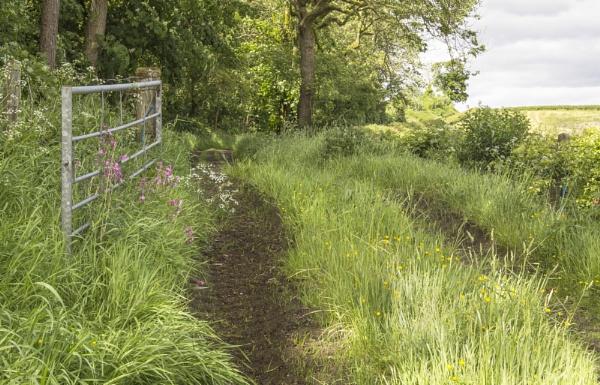 Country Lane by Irishkate