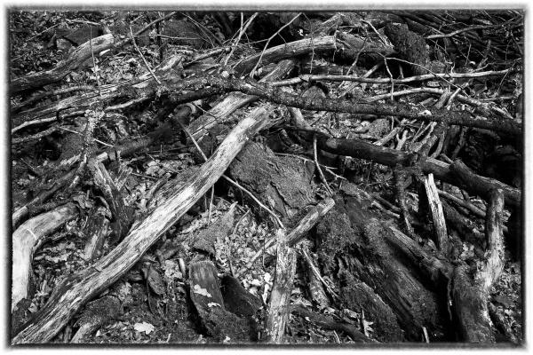 Woodland Debris by RolandC