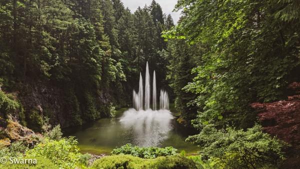 Fountains at Butchart Gardens, Victoria BC... by Swarnadip