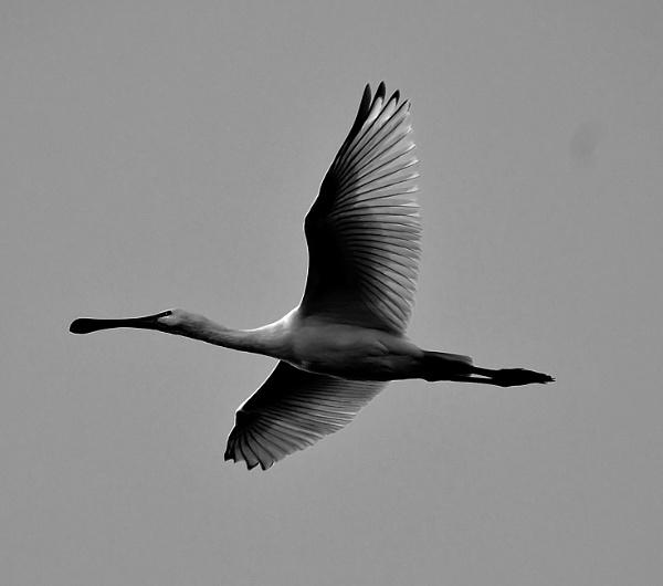 Glide by faulknerstv
