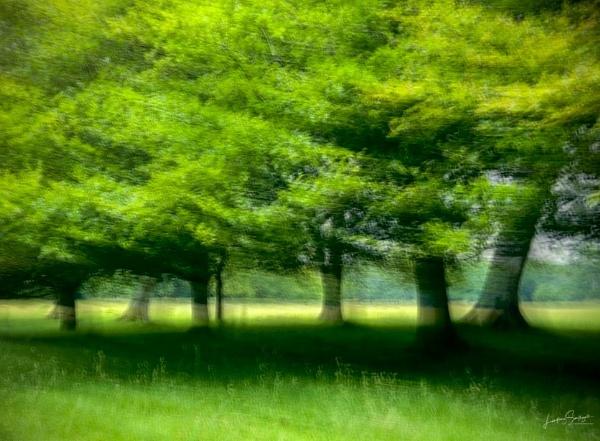 Vibrant trees icm by LLCJ