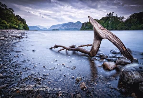 Driftwood On Derwentwater by NoelBennettPhotography
