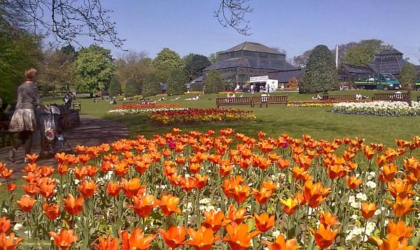 The Botanic Gardens: Glasgow. by Tooma