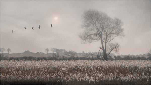 Misty Morning Flight by Leedslass1