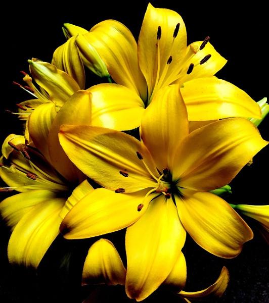 """""""Golden Lilies"""""""