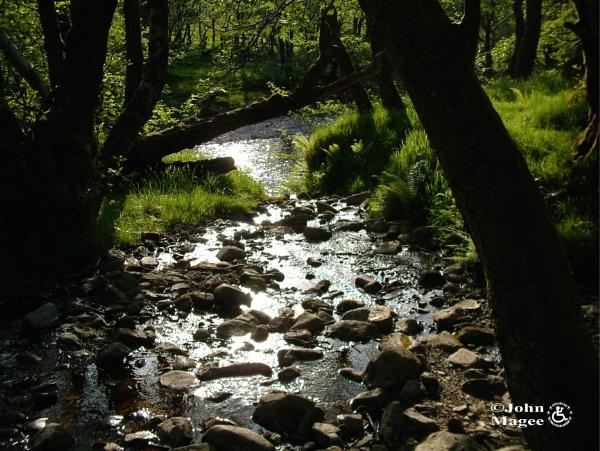 Woodland Stream by Jmag60