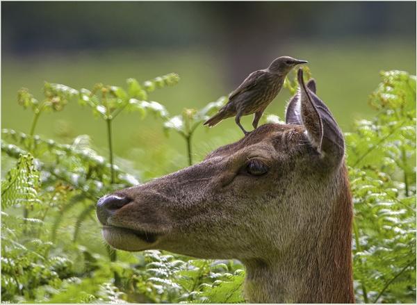 Whispering Moments my Deer by AnnetteK