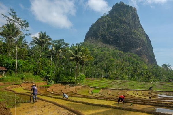 agricultural village by Nanang