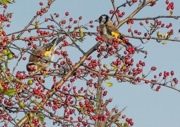 bird feeding by madbob