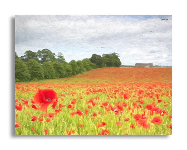 Poppy Field impressionism shot by sidcollins