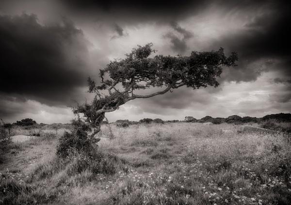 Windswept by natureslight