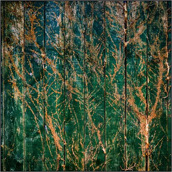 Taken in Isolation 34 by woolybill1