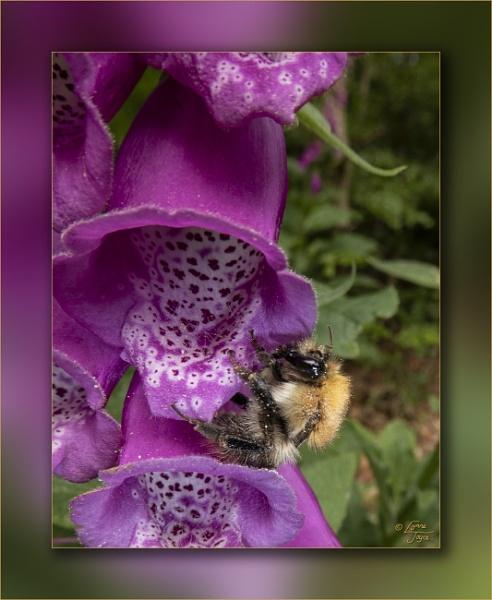 Bee Rescue & Bonny Blooms by LynneJoyce