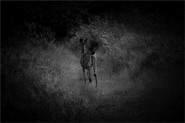 Down a Deer Hole by Daisymaye