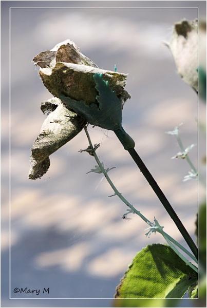 Fabric Rose by marshfam19
