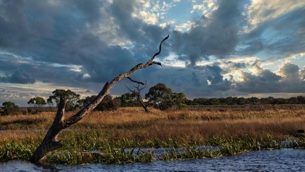 Braeside Wetlands by Regbaron