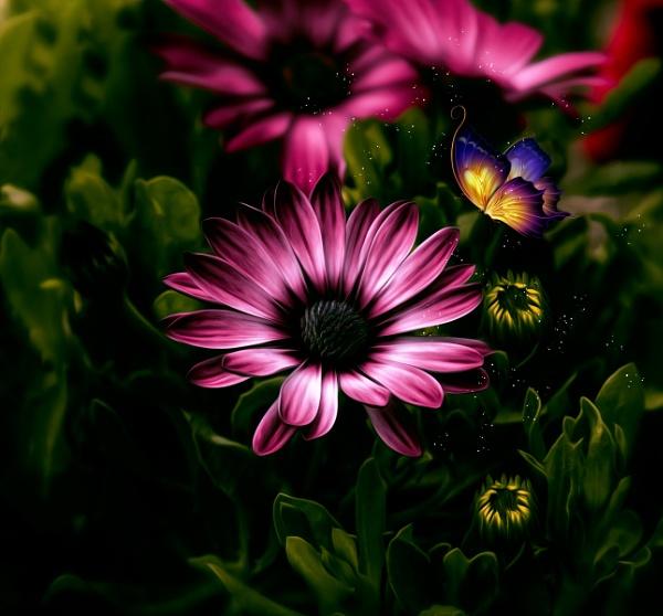 Floral by karen1961