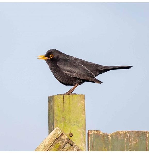Black bird has spoken.... by ghosts