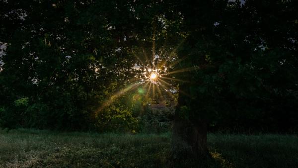 Sunburst Through A Tree by woodini254