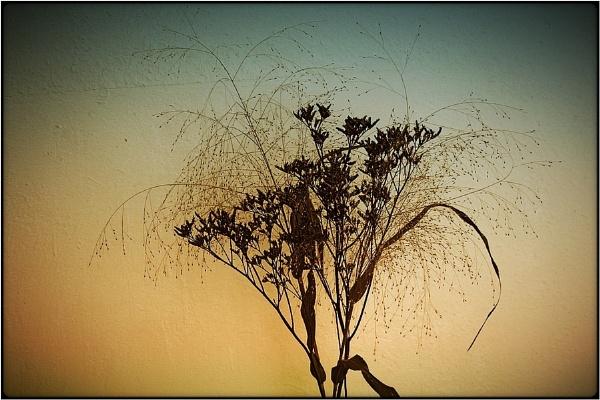 floral still by FabioKeiner