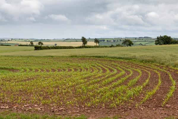 rural Devon by number9