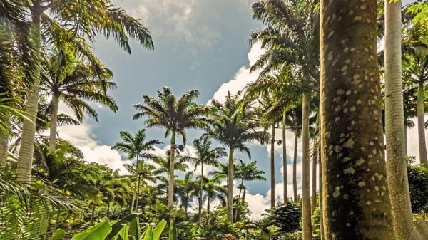 Palm Paradise by Bore07TM