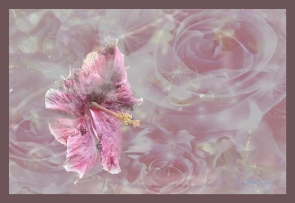 Impressionism; Hibiscus by Peco