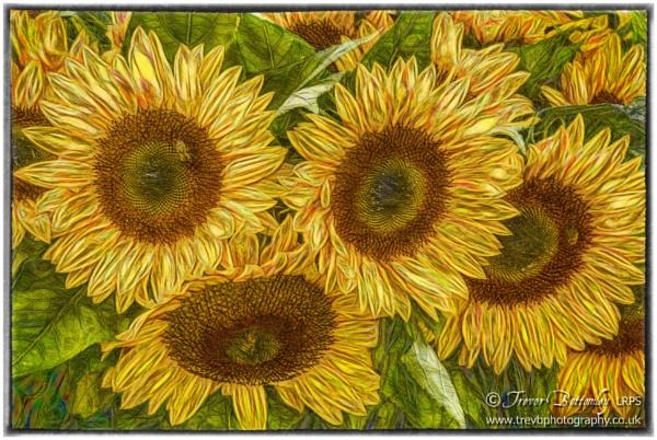 Sunflower Art by TrevBatWCC
