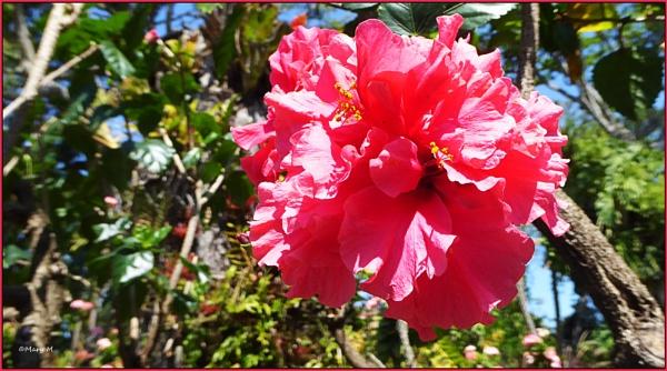 Tropical Flowers by marshfam19