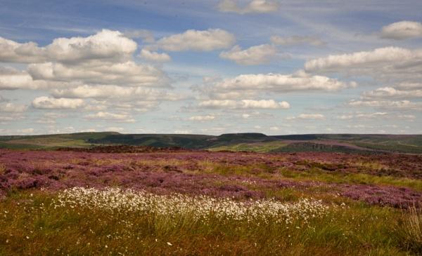 Peak District moorland heather by paulsfrear