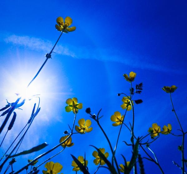 Summer days by paulsfrear