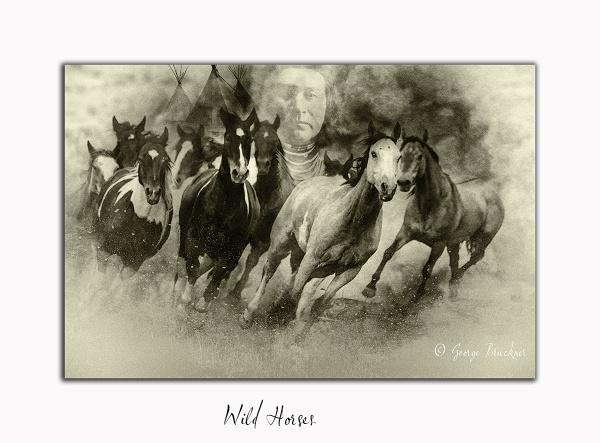 Wild Horses by rusty