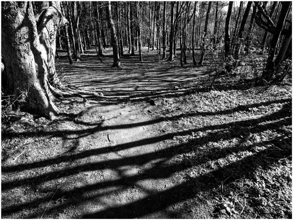 Shadowed Pathway by mac
