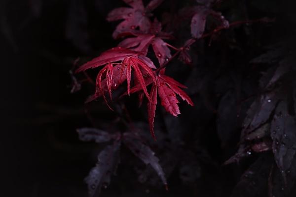 New Leaf by RadarUK