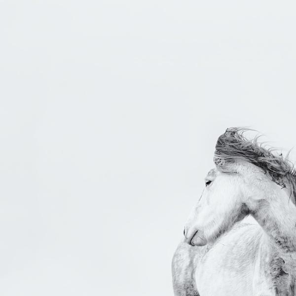 Eriskay pony by trusth