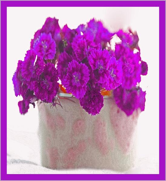 close to deep purple... by estonian
