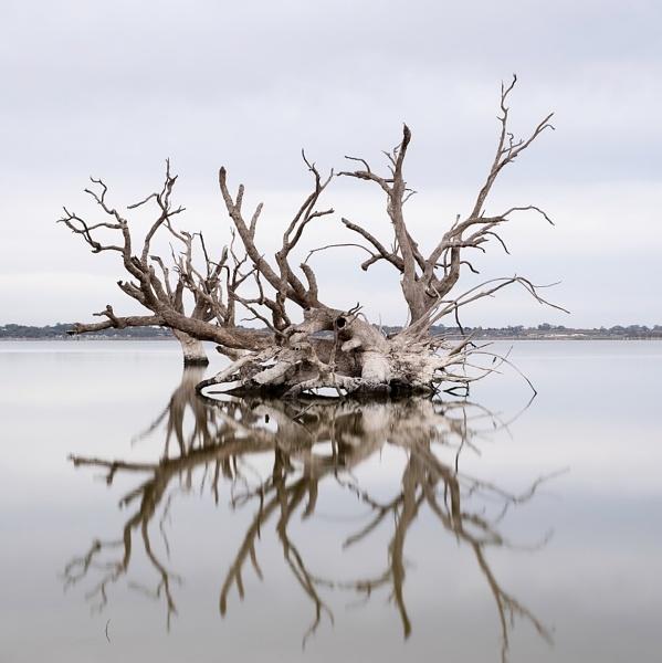 Dead Red a River Gums , Lake Bonney by jennialexander