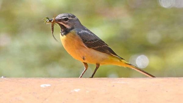 Feeding the little ones by stevecee