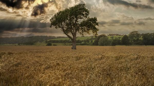 Harvest Time by Big_Beavis