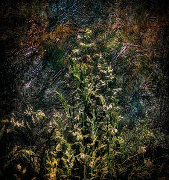 Grasses by adagio