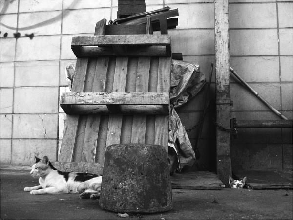 The Stray Cats by MediumSizeUnavailable