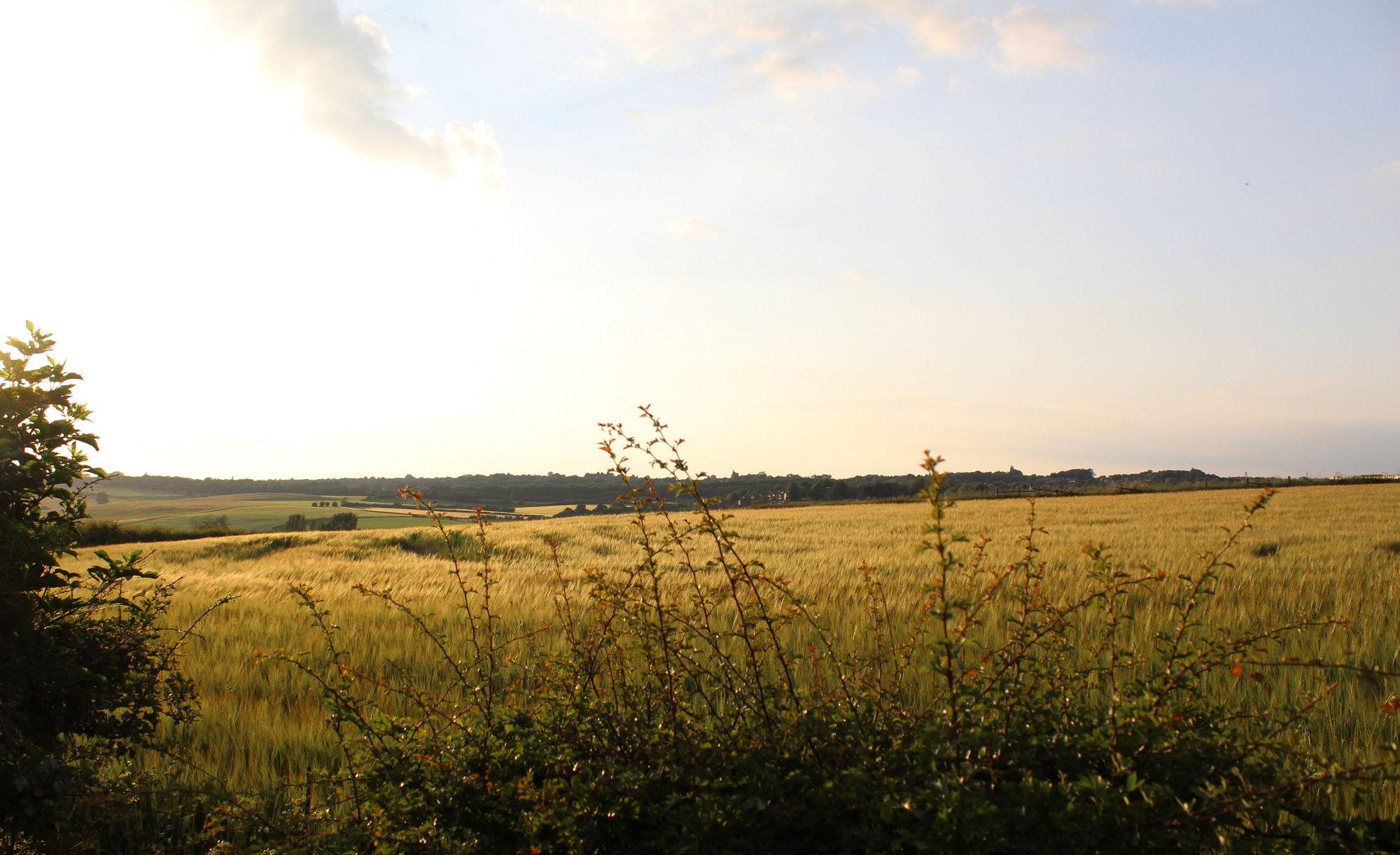 The Fields of Selston