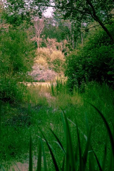 Newt Pond by JackAllTog