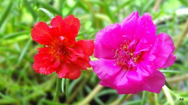 "\"" flower-bloom \"" by abssastry"